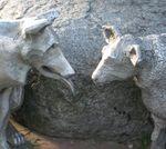 Information Wolves