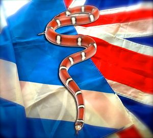 Flags_snake