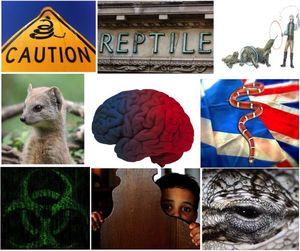 Reptile pic